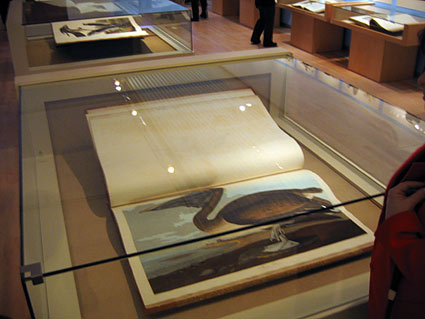 Audubon Exhibit at Teyler Museum