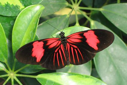 Butterflies at Vlinders aan de Vliet in Leidschendam