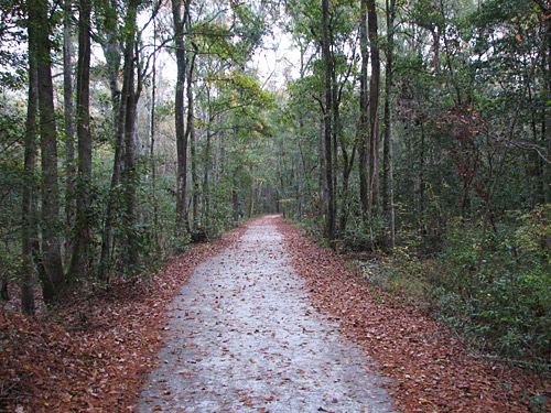 Great Swamp Sanctuary in Walterboro South Carolina