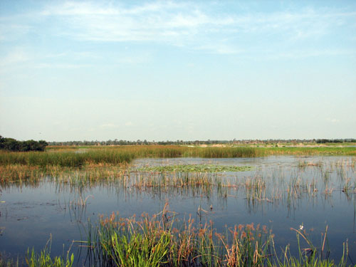 Overview of Viera wetlands