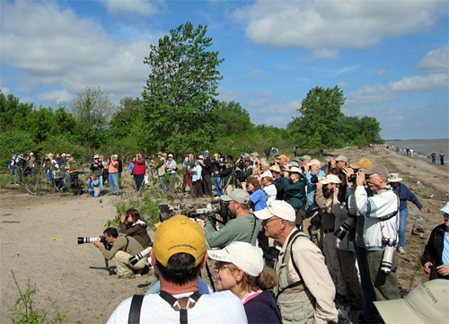 Flock of birders watching the Kirtland's Warbler on the beach near Magee Marsh