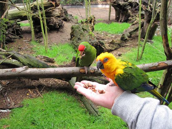 Papagaaienpark