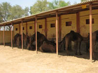 Camel Research Center