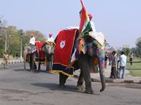 Elephant Festival 2006, Jaipur India
