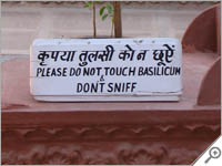 Do not sniff the bascilicum