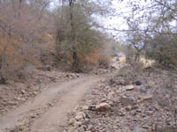 A road in Ranthambhore National Park, India