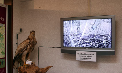 Television with live images of nesting White-tailed Eagles