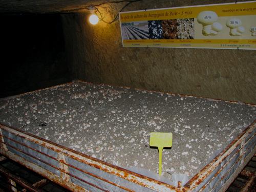 Mushroom Bed