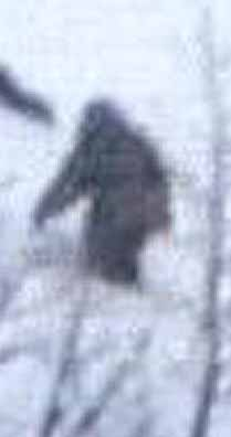 The other bigfoot