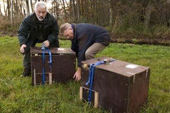 Otter release in Overijssel