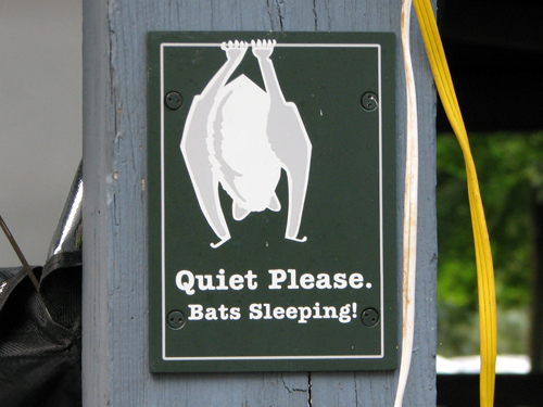 Quiet Please. Bats Sleeping!