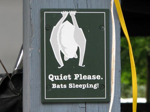 Quiet Please. Bats Sleeping!